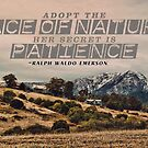 Adopt The Pace of Nature by Ewan Arnolda