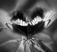 Flutter by Nicoletté Thain Photography