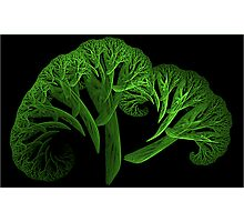 Apo Broccoli Photographic Print