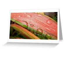 Raindrops on Flax Greeting Card