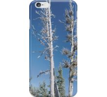 White Bark iPhone Case/Skin