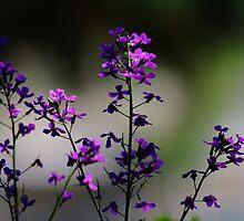 A Splash of Purple by Brian Dodd