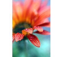 A Rainy Daisy Photographic Print