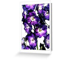 Delphinium - Postcard Greeting Card