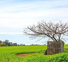 Lone Tree.... by mitpjenkeating