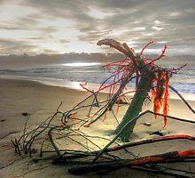 Orange Branch on sunrise, by Tyhe  Reading