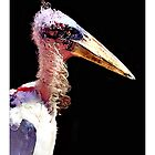 Marabou Stork - Postcard by Michelle Bush