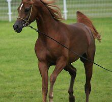 Arabian Horse by Touchstone21