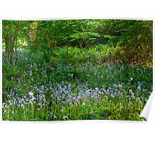 Spring blooms, Cockington UK Poster