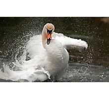 More swan attitude ! Photographic Print