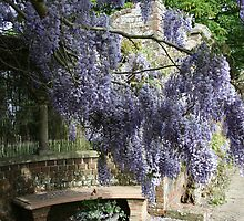 Wisteria Garden by Touchstone21
