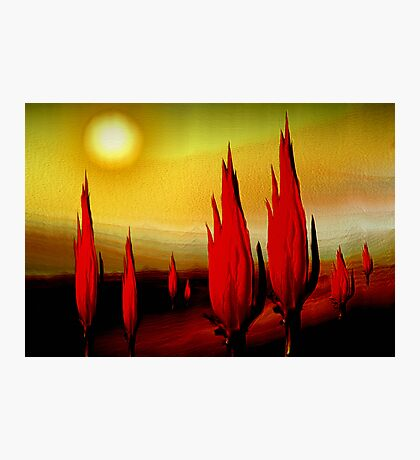 cactus burn before noon ...... melting desert abstract Photographic Print