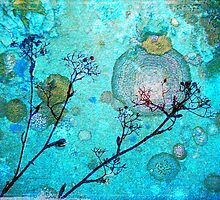 The Branches and the Moon by Tara  Turner
