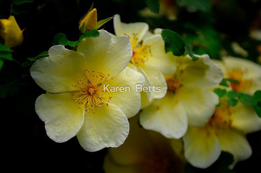 Yellow wild Rose by Karen  Betts
