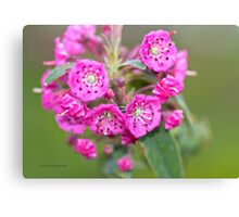 Bog Laurel Canvas Print