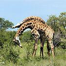 SERIOUSLY ? - GIRAFFE – Giraffa Camelopardalis (KAMEELPERD) by Magriet Meintjes