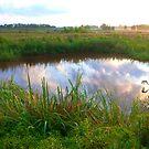6:00AM...Wildlife Refuge 1 by Charlie