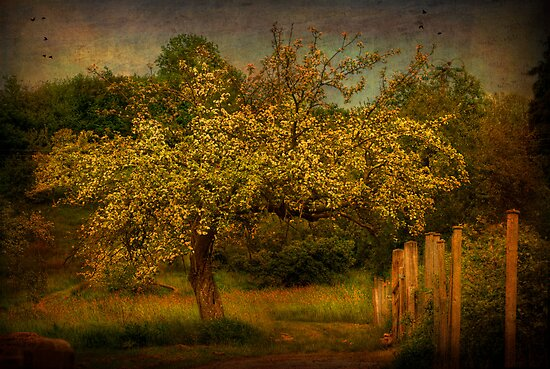 Tree And Fence by ajgosling