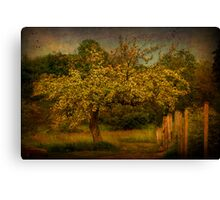 Tree And Fence Canvas Print