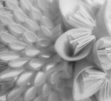 Paper flowers by Jemma Murphy