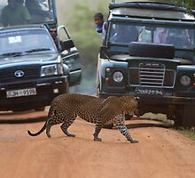 Leopard and Co. by Neil Bygrave (NATURELENS)