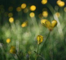 yellow dot by Russell Bradshaw