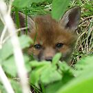 Fox cub by Pauline-W