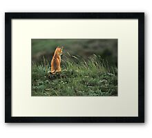 Alone but not Lonely, Fox photo by Donna Ridgway Framed Print