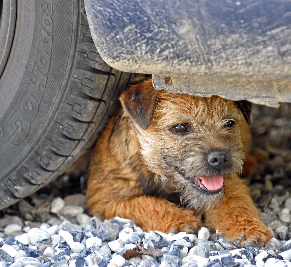 Tyred terrier by Alan Mattison