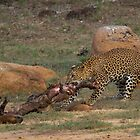 Leopard Draging Kill by Neil Bygrave (NATURELENS)