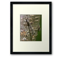 A Damsel in Camouflage Framed Print