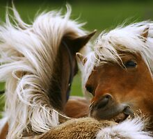 No..we are not fighting..back scratch for my bud.. by Gary Boudreau