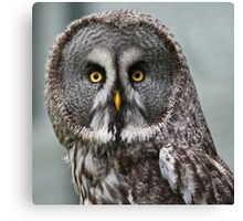 Great Grey Owl (Strix nebulosa) Canvas Print