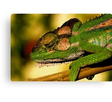 Just warming up!! Canvas Print