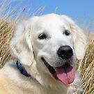 Portrait of a happy dog by Trine