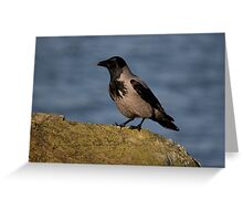 hooded crow Greeting Card