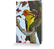 Western Tanager 2 Greeting Card