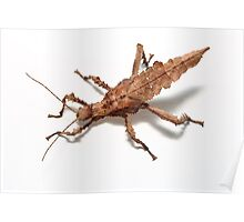 stick insect on white birds eye view Poster