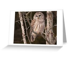 At Home With a Barred Owl Greeting Card