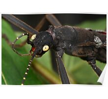 stick insect cleaning on a leaf Poster