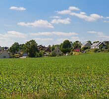 Maize Field, Beganne, Brittany, France by Elaine Teague