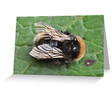 Bee's Wings Greeting Card