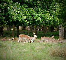 Richmond Park - London by Claire Haslope