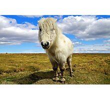 Dartmoor Pony Photographic Print