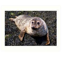 Wild Seal Up Close III Art Print