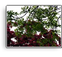 Red Tree Blossoms in Drop Shadow Frame Canvas Print