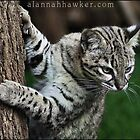Geoffroy's Cat by Alannah Hawker