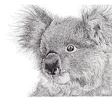 Sapphire The Koala by BelladonnaArt