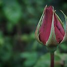 Ready to Bloom by Laura Cooper