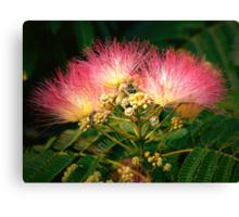 """The Beautiful Mimosa Tree"" Canvas Print"
